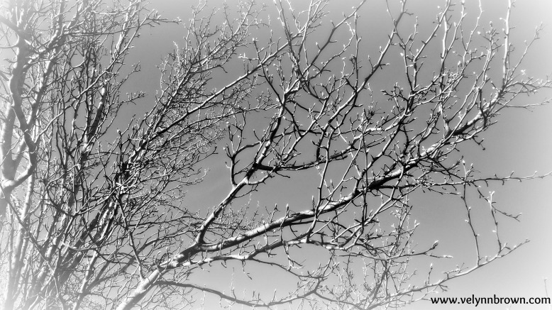Barren Branches